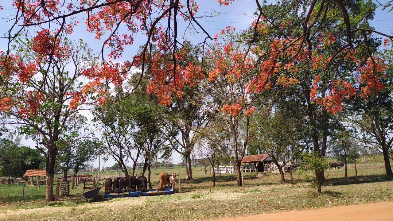 Assentamento produz, desde 2002, uma diversidade de alimentos sem agrotóxicos. Foto: Arquivo pessoal Daniela Bernadete Calza
