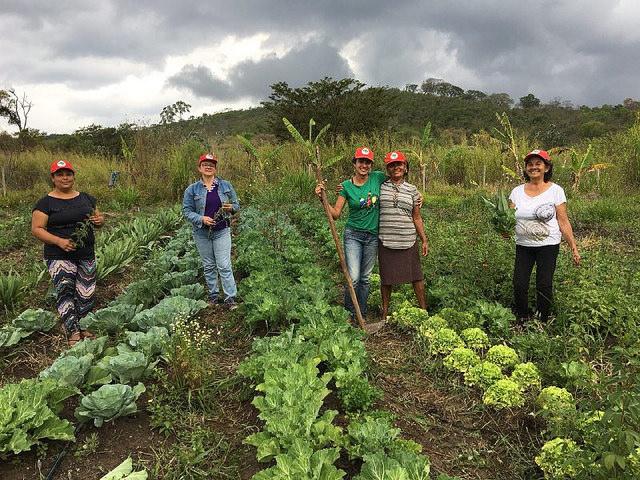 Cerca de 2 mil trabalhadores produzem uma diversidade de alimentos para revenda e consumo.. Foto: Douglas Mansur