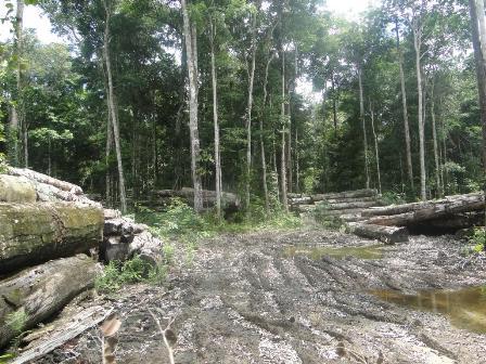 Foto madeira Resex