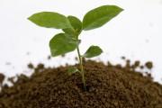 planta brotando fundo branco