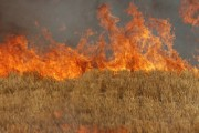Hungria_Monsanto_Propane-Field-Burning-290x290