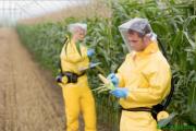 Agricultores-Verificando-Toxicidad-Maiz-Transgenico-Monsanto-e1395099849323
