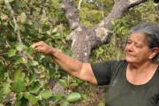 Raizeira coleta flores de laranjinha do campo, Goiás (fonte: Articulação Pacari)