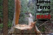 Exploração ilegal madeira