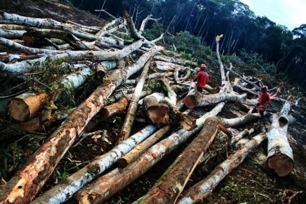 Desmatamento no Brasil. Creator: Eduardo Santo