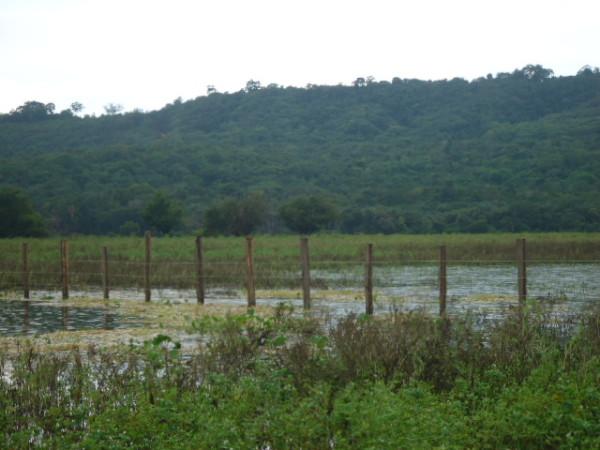 Apesar de ser pública, área de várzea é cercada por fazendeiro